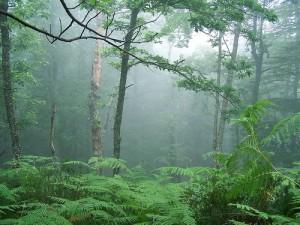 Bosque de Cantabria