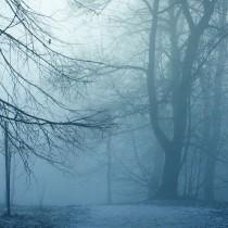 bosque-helado